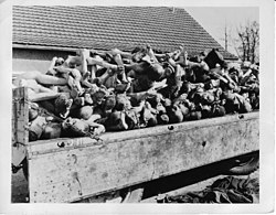 the horrifying experiences in the german concentration camps of auschwitz and buchenwald Night questions and answers experience with his father in the auschwitz, buchenwald, and buna death camps  his time in german concentration camps during.